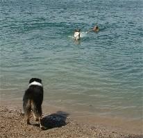 Schwimmen2